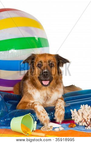 Conceptual studio image of a happy dog at the seaside lying on a blue plastic lilo with a bucket and large colourful striped beachball poster
