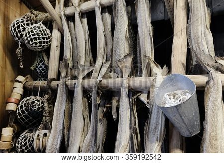 Drying cod fish in winter. Reine fishing village, Lofoten islands, Norway