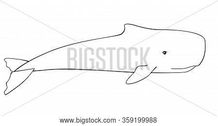 Whale. Sperm Whale - A Huge Animal From The Ocean - Vector Linear Picture For Coloring. Sperm Whale