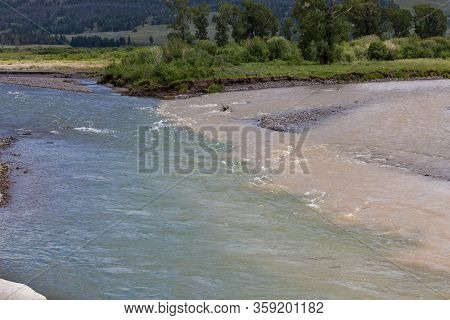 Clear Blue Green Water From Soda Butte Creek Meeting The Muddy Brown Water Of Amphitheater Creek On