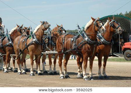 Team Of Horses