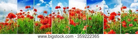 Collage from bright juicy landscapes abloom poppy field in spring.