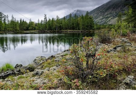 On The Shore Of A Mountain Lake, Stones, Hummocks And Forest. Cloudy Day With Reflection, Natural Li