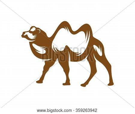 Camel Logo Vector, Animal Graphic, Camel Design Template Illustration