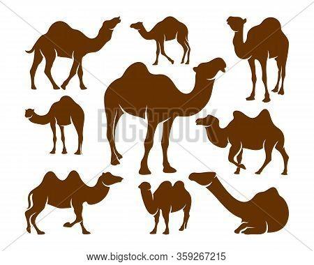 Set Of Camel Logo Vector, Animal Graphic, Camel Design Template Illustration