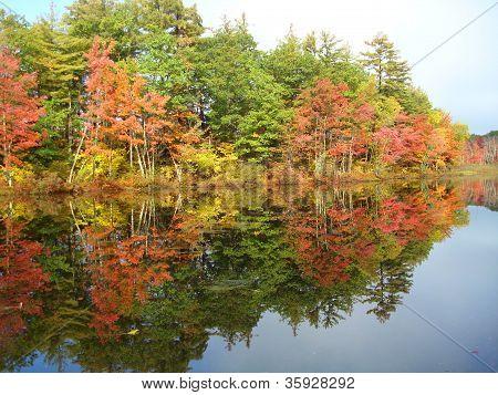 fall foliage in New Hamphise 1
