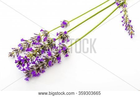 Bouquet Of Lavender Flowers And Seeds On White Background. Isolated On White Background.