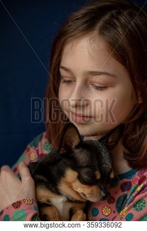 Little Girl With A Chihuahua. Girl Holding Chihuahua.girl With Her Pet In Her Arms.chihuahua In Blac