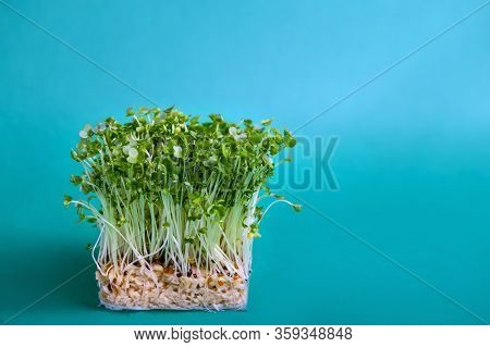 Young Fresh Green Sprouts Of Water Cress On Blue Turquoise Background. Gardening Healthy Plant Based