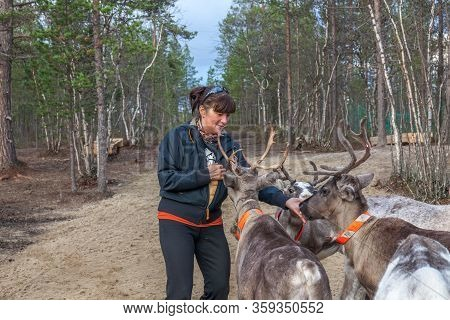 Woman Feeds Reindeer, Sami, Sami Village On The Kola Peninsula, Russia. Tourist Ethnographic Parking
