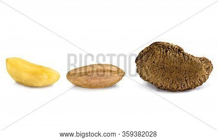 Peeled Brazilian Nut, Outside The Coconut, Known As