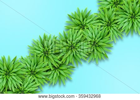 Natural Background Of Lily Leaves On An Aqua Base. Concept Of Summer Relaxing Exotic. Leaves Are Loc