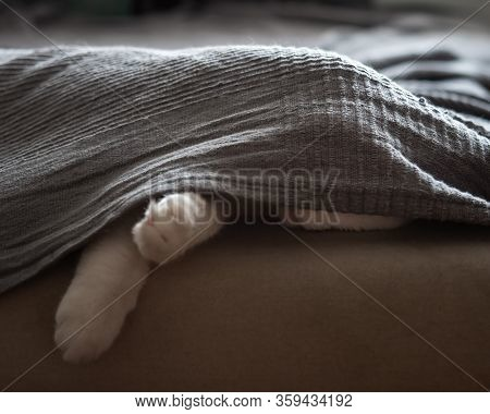 The Cat Sleeps On The Couch, Hiding Under A Gray Blanket. Paws Are Visible From Under The Bedspread,