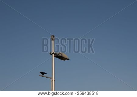 Metal Light Pole With Industrial Lighting Fixture And Blackbird Against A Blue Sky, Copy Space, Hori