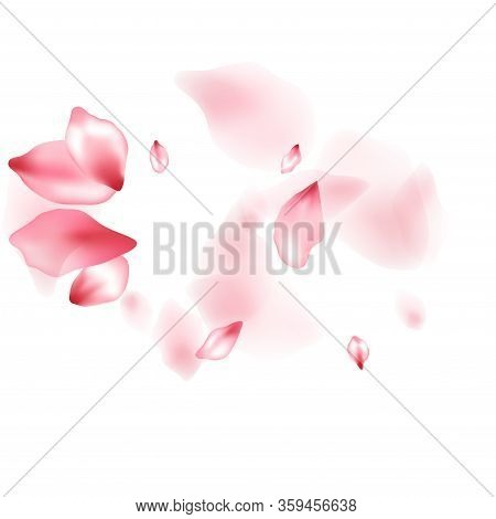 Apple Flower Flying Petals Isolated On White. Glamour Floral Background. Japanese Sakura Petals Seas