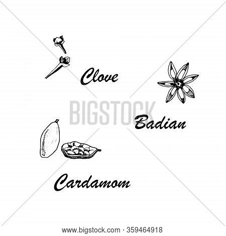 Vector Botanic Illustration With Clove, Cardamom, Badian On White Background. Hand Drawn Food Collec