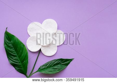 Flower Made Of White Cotton Round Pads And Real Green Vivid Green Leaves On Purple Background. Conce