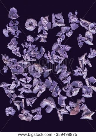 Dried Hydrangea Flowers. Abstract Flatlay, Top View. Vertical Format. Free Space For Your Text. Viol