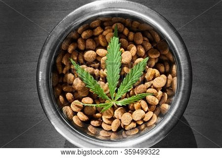 Cbd Hemp Food Delicacy For Dogs And Cats In Dishes With Green Leaf Of Hemp Close-up With Copy Space