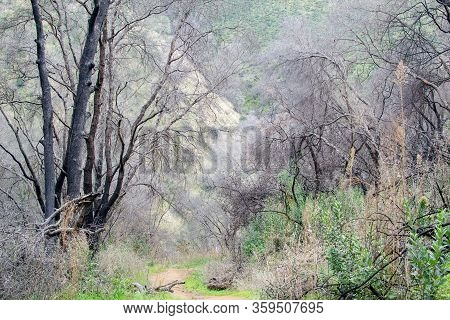 View Of A Path At The Stebbins Cold Canyon Preserve, California, Usa, Passing Through An Area That W