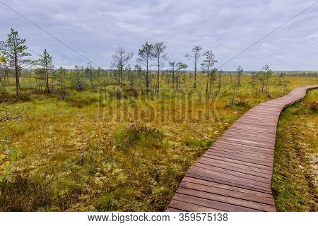 Sestroretsk Swamp. Hiking Trail In The Swamp, Sestroretsk Town, Leningrad Oblast, Russia.