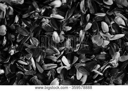 Husks Of Sunflower Seeds. Abstract Husks Background, Selective Focus