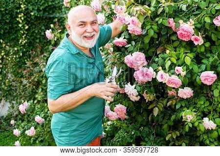 Bearded Senior Gardener In An Urban Garden. Gardener In The Garden. Professional Gardener At Work