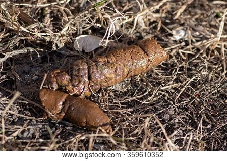 Close Up Feces, Dog Poop Background On Soil Of Dog Feces Soil On Gravel Field. Shit Dog On Dry Grass
