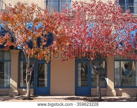 Fall Colors On Trees Against Adobe Building In The Southwest
