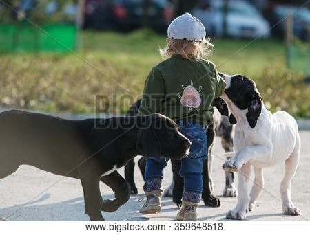 Girl Child Having Fun With The Great Dane Puppy
