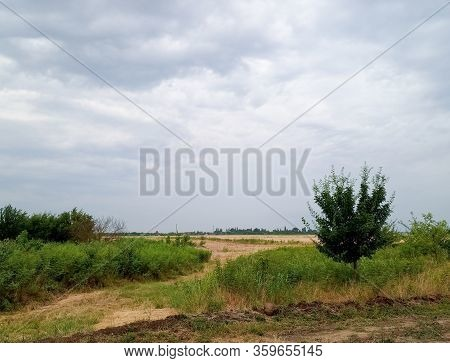 Rural Landscape, Beveled Hay And Trees Next To The Field.