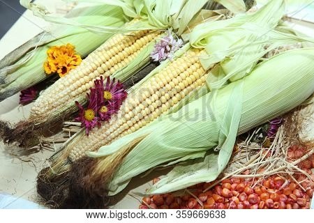 Ripe Corn On Wooden Background . Grains Of Ripe Corn On Wooden Background. Fresh Corn On The Cob - A