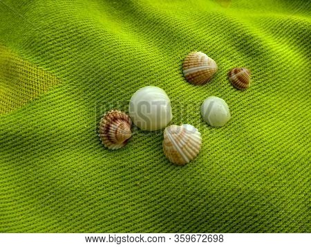 Many Small Striped Shells Lying On A Soft Bright Green Towel Colored