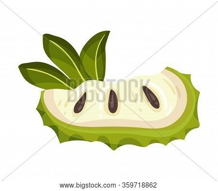 Slice Of Soursop Fruit Or Guanabana With Dark Green Rind Covered With Thick Thorns Vector Illustrati