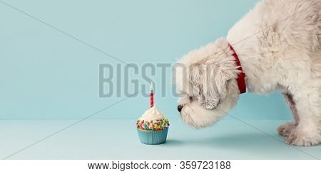 Small white dog and birthday cupcake