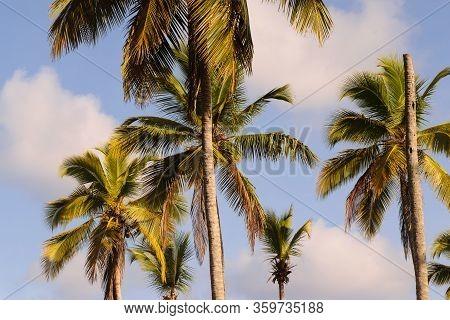 Travel Vacation Tropical Destination. Palm Tree Beach Landscape. Travel Vacations Destination. Trave
