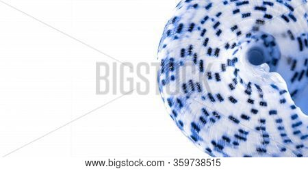Summer Holidays Background. Trendy Aquamarine Light Blue Color Seashell On White Backdrop. Summer Is