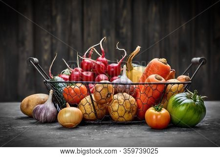 Farm harvest vegetables with spicy herb spice and garden inventory Rural still life on grey concrete surface in rustic style.