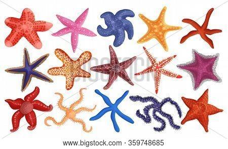 Sea Starfish Vector Cartoon Set Icon. Vector Illustration Marine Star On White Background. Isolated