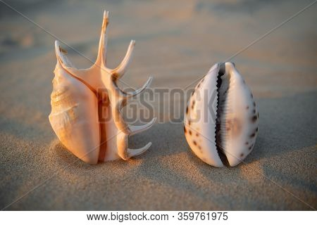 Vagina-shaped Seashell On The Background Of The Inscription Labiaplasty. Female Health Concept