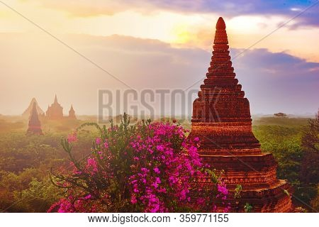 Bagan Myanmar Bougainvillea Flowers And Beautiful Stupas At Sunrise