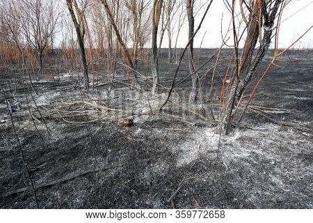 Nature Burnt After A Wildfire, Burnt Forest And Grass Natural Disaster Image. Save Nature, Protect E