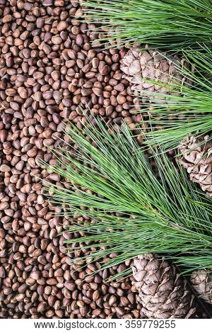 Unshelled Siberian Cedar Pine Nuts, Cones, Branches Like A Background
