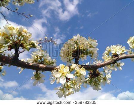 blooming spring flowers fruit trees outdoors blur sky