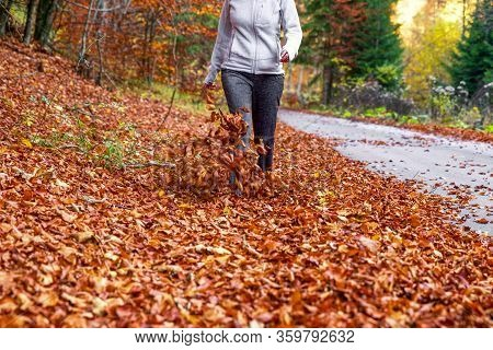 Walking Woman On Falling Autumn Leaves In Forest