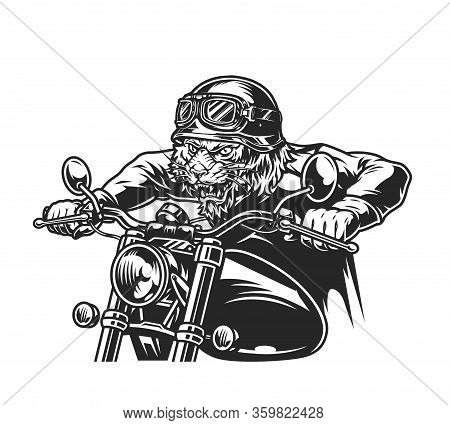 Vintage Motorcycle Concept With Ferocious Tiger Head Biker In Moto Helmet Riding Motorbike Isolated