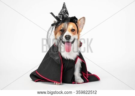 Cute Playful Welsh Corgi Cardigan Or Pembroke Dog In Black Mantle And Witch Pointed Hat With Veil Si