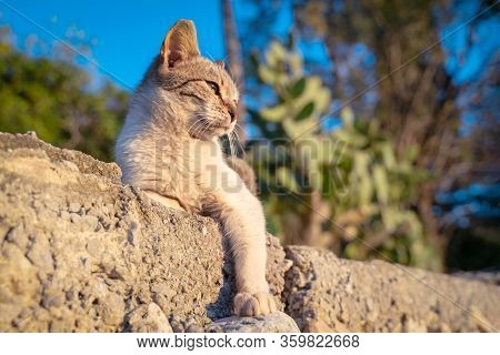 Portrait Of Smug Gray Stray Cat Lies On Concrete Parapet With His Paw Hanging And Basks In The Sun O
