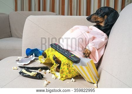 Fat Dog Couch Potato Eating A Popcorn, Chocolate, Fast Food And Watching Television. Parody Of A Laz