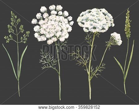 Beautiful Watercolor Floral Set With Field Grass And Flowers. Stock Illustration.